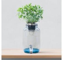 Hidroponia Blue Jar